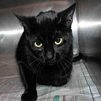 Adopt A Pet :: PELE - Aurora, IL