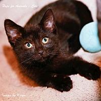 Adopt A Pet :: Cole - Marlboro, NJ