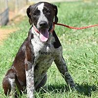 Adopt A Pet :: Tampa - Grenada, MS