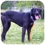 Photo 3 - Labrador Retriever Mix Dog for adoption in Austin, Minnesota - Claude