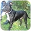 Photo 1 - Pit Bull Terrier Mix Dog for adoption in Greenville, North Carolina - Buddy