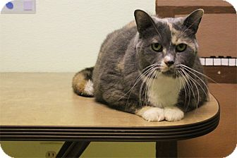 Domestic Shorthair Cat for adoption in Elyria, Ohio - Millie