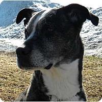 Adopt A Pet :: Glory - Rigaud, QC