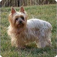 Adopt A Pet :: Kirby - Charlotte, NC