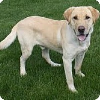 Adopt A Pet :: Adonis - Lewisville, IN