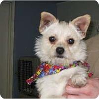 Adopt A Pet :: Skippy - Windham, NH