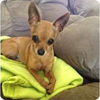 Adopt A Pet :: Pixie - Oceanside, CA
