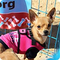 Adopt A Pet :: Lizzy - Kempner, TX