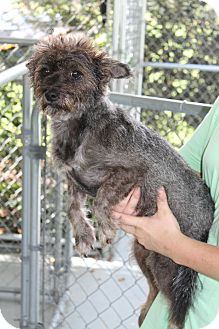 Terrier (Unknown Type, Small) Mix Dog for adoption in Atmore, Alabama - Mattie