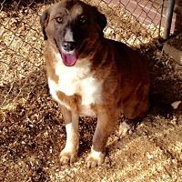 Adopt A Pet :: Emma - Baxter, TN