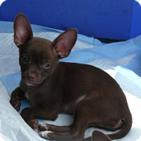 Adopt A Pet :: Coco and Oscar (can be adopted separately) - REDDING, CA