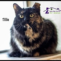 Adopt A Pet :: Tillie - Richardson, TX