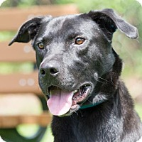 Adopt A Pet :: CONNOR - Fernandina Beach, FL