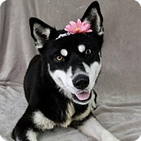 Adopt A Pet :: Lola - Picayune, MS