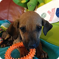 Adopt A Pet :: Sonnie - Mount Holly, NJ