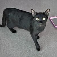 Adopt A Pet :: Jade - Littleton, CO