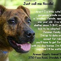 Adopt A Pet :: NOODLE - Standish, MI