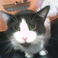 Adopt A Pet :: Orestes - Cincinnati, OH