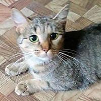 Adopt A Pet :: Cuddles - Princeton, NJ