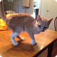 Adopt A Pet :: Tara - Pace, FL