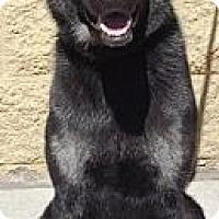 Adopt A Pet :: Loki - Gilbert, AZ
