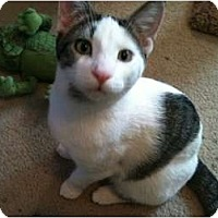 Adopt A Pet :: Terry - Sterling Hgts, MI