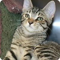 Adopt A Pet :: Keebie - Canoga Park, CA