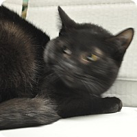 Adopt A Pet :: Star - Rockaway, NJ