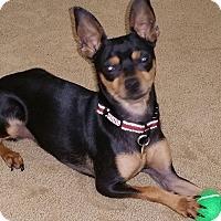 Adopt A Pet :: Baby Face - Oceanside, CA