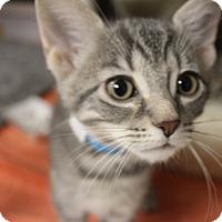 Adopt A Pet :: Pip - Medina, OH