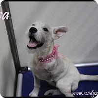 Adopt A Pet :: Elsa - Rockwall, TX