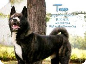 Akita Dog for adoption in Toms River, New Jersey - Tomo