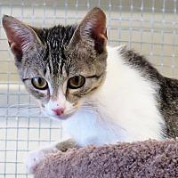 Adopt A Pet :: Angelina - Gonzales, TX