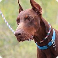 Adopt A Pet :: Mega - Fillmore, CA