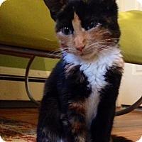 Adopt A Pet :: Rainbow - Trenton, NJ