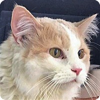 Adopt A Pet :: Dixon - Germantown, MD