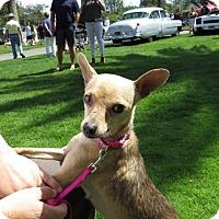 Adopt A Pet :: Princess PINKIE - Napa, CA