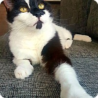 Adopt A Pet :: Pickles - Vancouver, BC