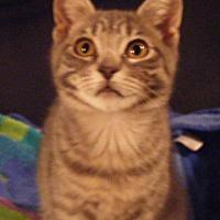 Adopt A Pet :: Lanny - Kensington, MD