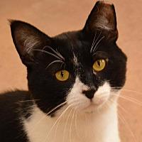 Adopt A Pet :: Benson - Cincinnati, OH