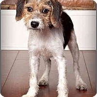 Adopt A Pet :: Serena - Owensboro, KY