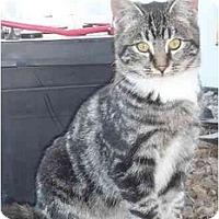 Adopt A Pet :: Casanova - Strathmore, AB