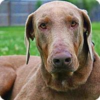 Adopt A Pet :: Fallon - New Richmond, OH