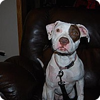 Adopt A Pet :: Sabrina - Leesburg, FL