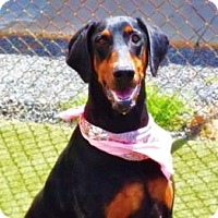 Adopt A Pet :: Piper - Allegan, MI