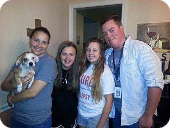 Chihuahua Mix Dog for adoption in Sacramento, California - Hawkeye