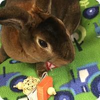 Adopt A Pet :: Lucious - Williston, FL