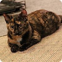 Adopt A Pet :: Mischone - Raritan, NJ