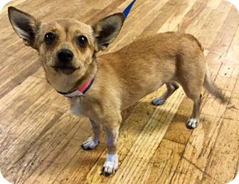 Border Terrier Mix Dog for adoption in Phoenix, Arizona - Cucumber