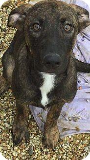 Labrador Retriever Mix Dog for adoption in Hammond, Louisiana - Cherry